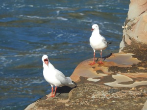 17-07-sea-gull-screeching-at-wasp-head-1