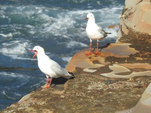 17-07-sea-gull-screeching-at-wasp-head-2