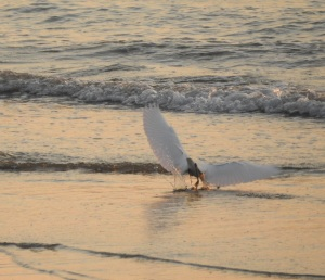 17-09-23-egret-flying-at-sunrise-north-broulee-2