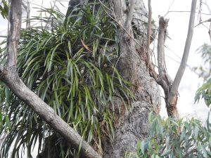 17-09-orchids-bodalla-state-forest-2