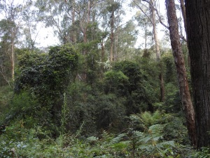 17-09-the-forest-bodalla-state-forest-3