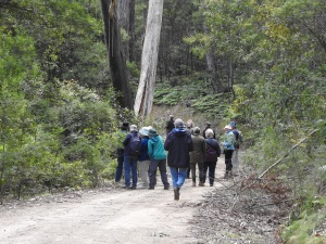 17-09-the-group-bodalla-state-forest