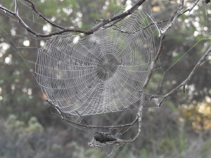 17-11-spiders-web-at-sunrise-north-broulee