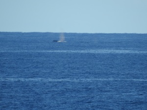 3-17-06-whale-off-toragy-point-2