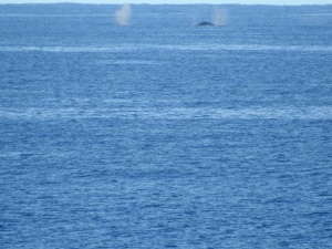 3-17-06-whale-off-toragy-point-3