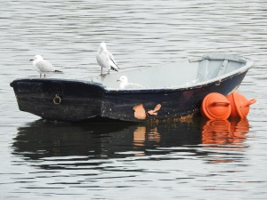 7-17-06-three-seagulls-in-boat-on-moruya-river
