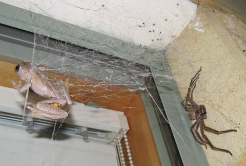 Perons Tf and Huntsman using Black House Spider