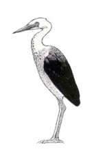 reversed wn heron
